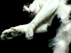 sleep_mimi_2