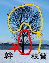 幹と、枝葉