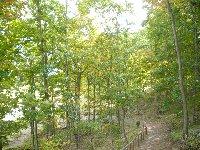 周辺の雑木林。自然は手をかけてこそ美しい