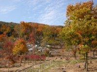 ~秋色~ たけやま森の学校の裏山