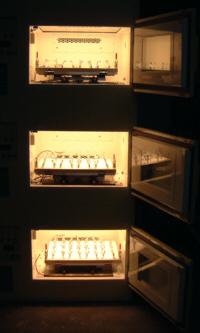 光照射振盪培養機