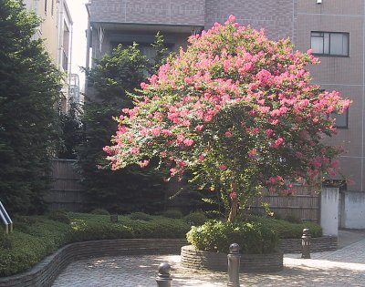 200309-花