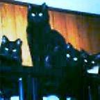 黒猫4兄弟
