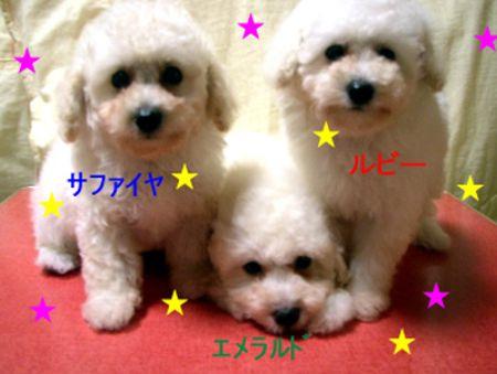 三匹の子犬