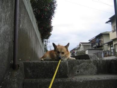 階段は嫌いだよ~。