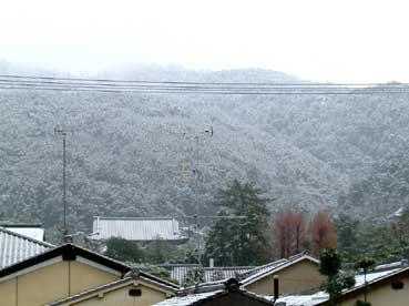 kusakawatyou2005