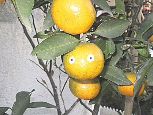 みかんの顔黄色