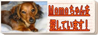 momoちゃんを探しています!