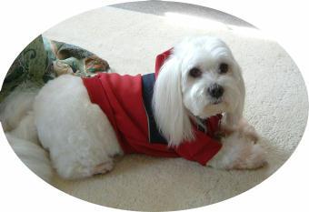 QTY DOG
