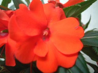 テラスの花4