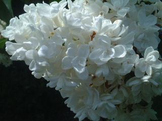 田舎のウチの花