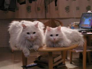 ミミ&チミリ