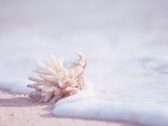 coral&beach
