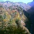 紅葉2004