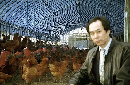 比内地鶏鶏舎内にて