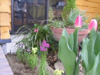 入り口の花