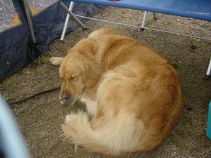 テントで寝るラル