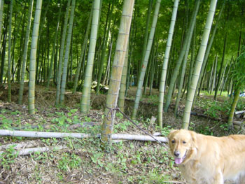 竹林とラルフ