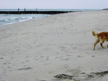 海にて。ラルフのしっぽ