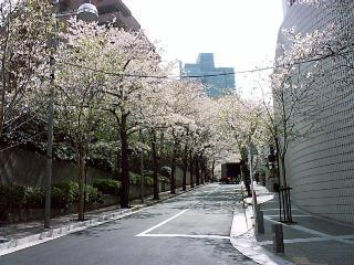 sakura2004