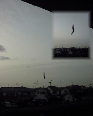 ナメクジ 飛ぶ