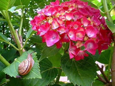 6月の花 私の趣味の写真館へようこそ 楽天ブログ
