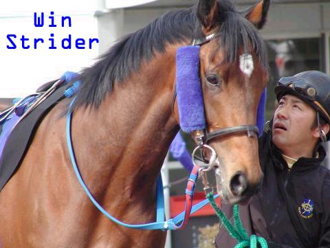 WinStrider2