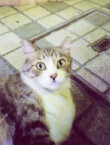 cat in machida-city