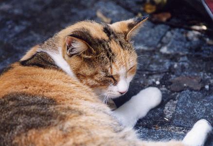 眠り猫・・・