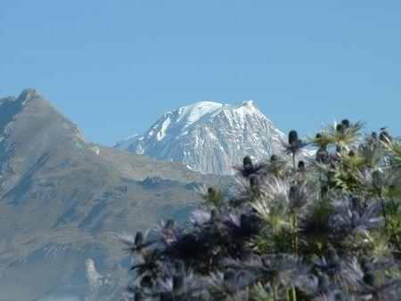 ベルナール峠より高山植物越のモンブラン