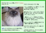 cat2p