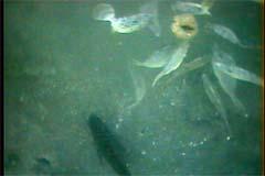魚がいっぱい!餌の争奪戦