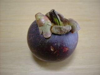 マンゴスチン食べ方1