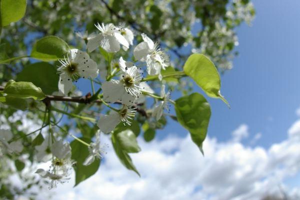 かわいい春の香り(^^)