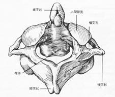 環椎軸椎白黒図