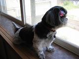 窓で外を見るマユ