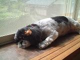 窓辺でのんびりマユ「まだ眠たいの・・」