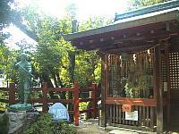 一乗寺下がり松 展示古木