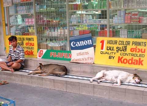 タイのお犬様