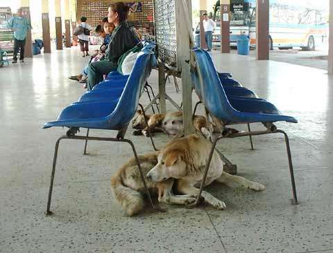 あるバスターミナルのお犬様