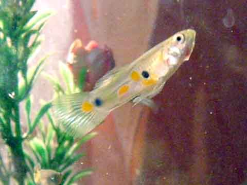 熱帯魚(1)