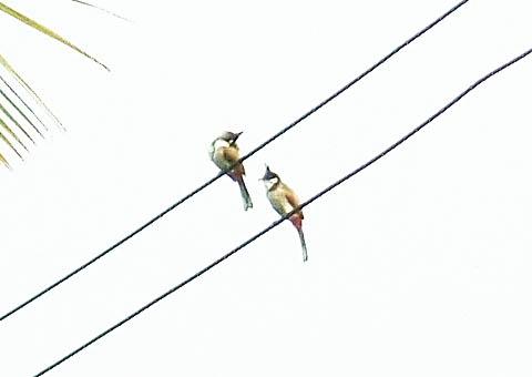 鉄腕アトム鳥