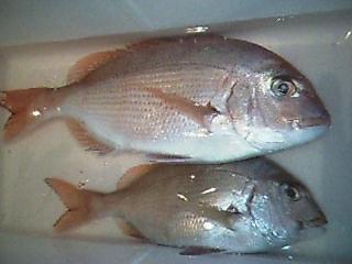 200412鯛