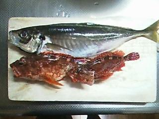 200507釣果