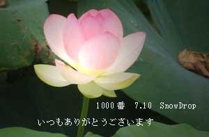 吉乃さん1000キリ番