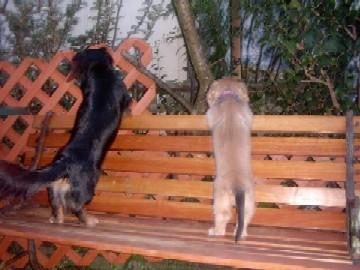 ベンチで花壇を覗き込む2匹