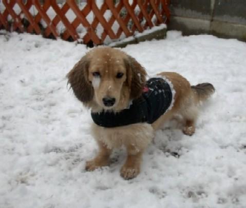 パール雪遊び