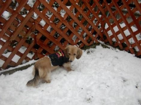 パール雪遊び♪