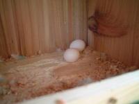 3.23卵!
