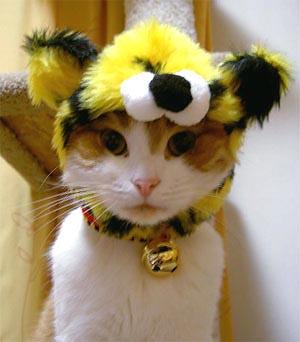 猫虎かぶり